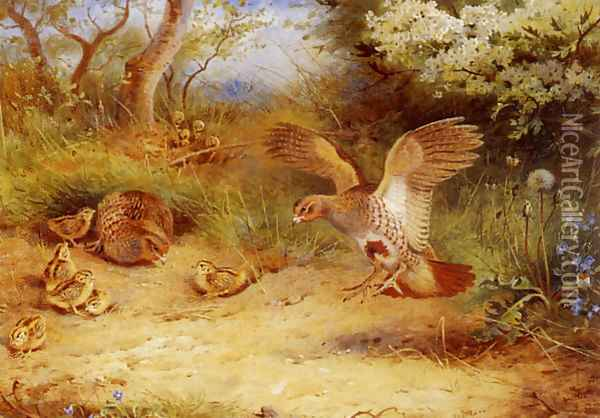 Summer Partridge and Chicks Oil Painting - Archibald Thorburn
