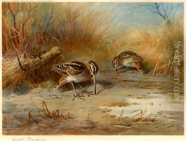Snipe Probing Oil Painting - Archibald Thorburn