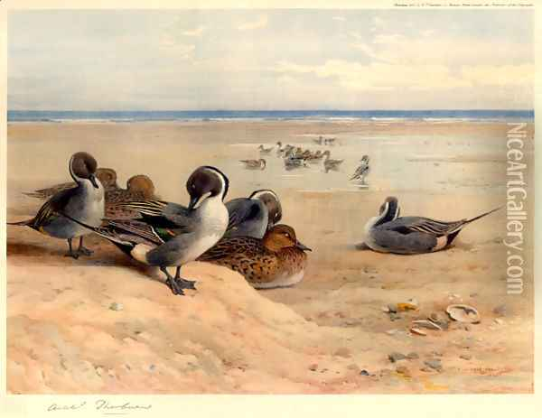 Pintails on the Shore Oil Painting - Archibald Thorburn