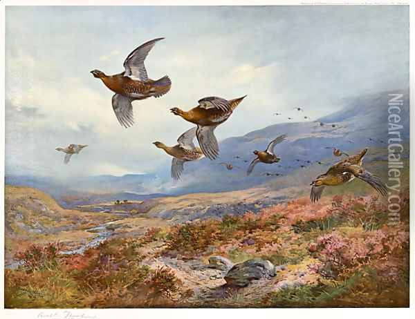 Grouse Over the Burn Oil Painting - Archibald Thorburn
