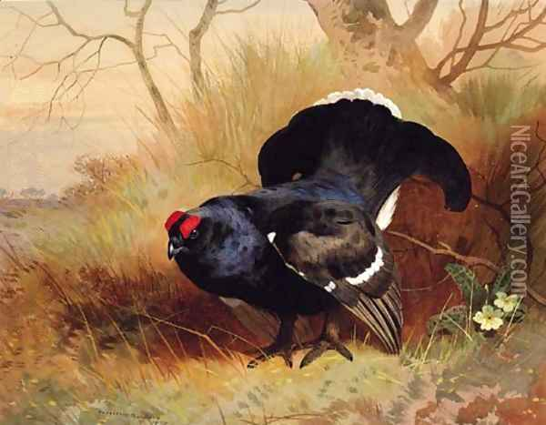 A Blackcock in a Woodland Clearing Oil Painting - Archibald Thorburn