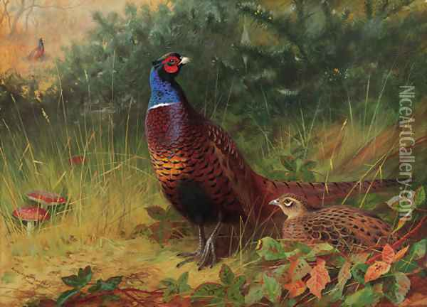 'In the Furze Breake' A cock and hen pheasant among gorse Oil Painting - Archibald Thorburn