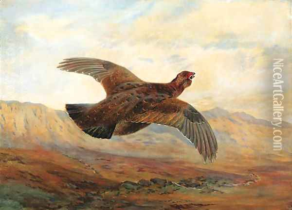 A Red Grouse in flight above Moorland Oil Painting - Archibald Thorburn