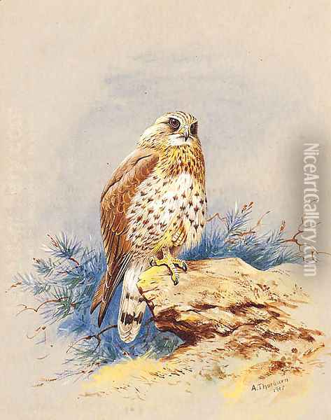 A Kestrel perched on a Rock Oil Painting - Archibald Thorburn