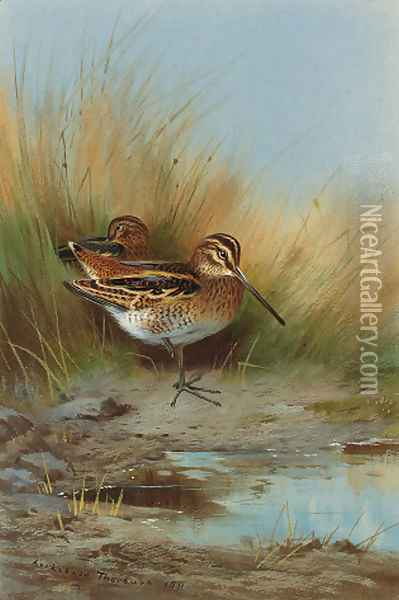 Snipe at the water's edge Oil Painting - Archibald Thorburn