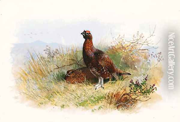 A Pair of Red Grouse Oil Painting - Archibald Thorburn