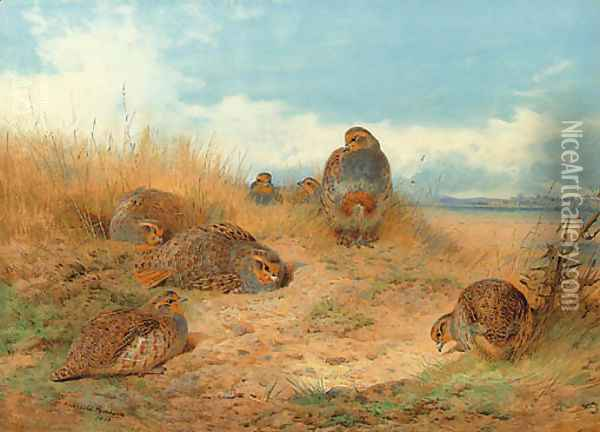 Basking in the noonday Sun A Covey of Grey Partridge Oil Painting - Archibald Thorburn