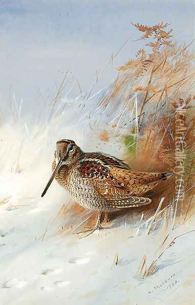 A Woodcock in Winter Oil Painting - Archibald Thorburn