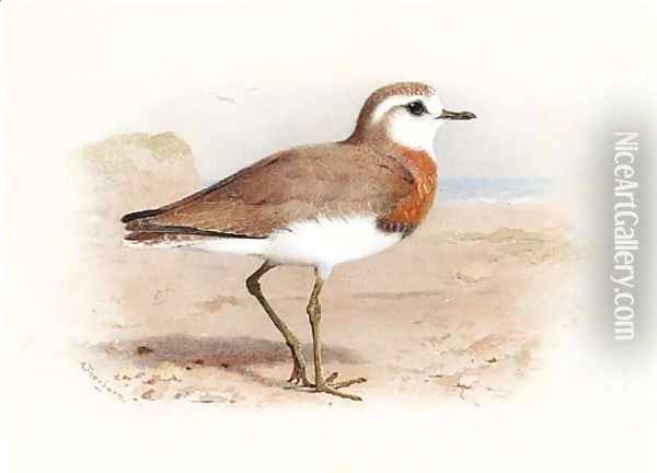 Caspian Plover Oil Painting - Archibald Thorburn
