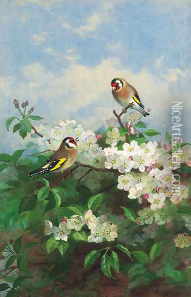 Goldfinches among apple blossom Oil Painting - Archibald Thorburn