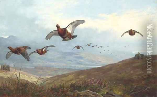 Grouse shooting Oil Painting - Archibald Thorburn