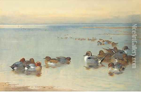 Teal and Widgeon Oil Painting - Archibald Thorburn