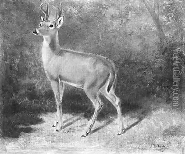 Deer--Sketch from Nature Oil Painting - Arthur Fitzwilliam Tait