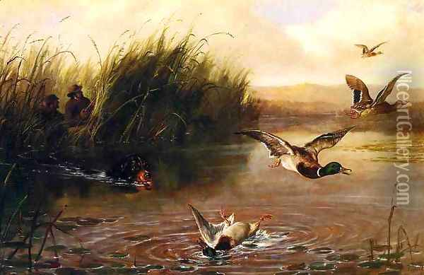 Duck Shooting Oil Painting - Arthur Fitzwilliam Tait