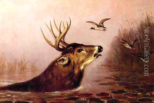 Deer in Marsh Oil Painting - Arthur Fitzwilliam Tait