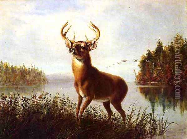 Eight Point Stag Oil Painting - Arthur Fitzwilliam Tait