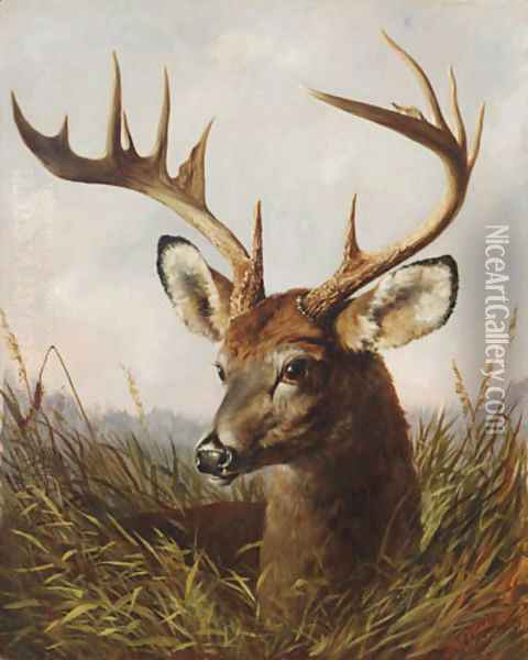 The Stag Oil Painting - Arthur Fitzwilliam Tait
