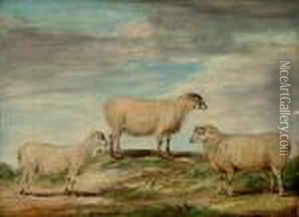 Elman's South Down Ram, Ewe And Wether Oil Painting - James Ward