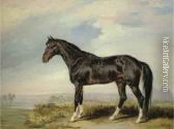 A Dongola Stallion From Nubia Oil Painting - James Ward