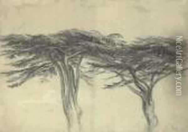 Study Of Two Cedars Of Lebanon Oil Painting - James Ward