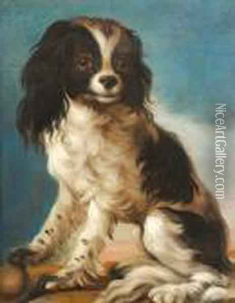 Study Of A King Charles Spaniel Oil Painting - John Wootton
