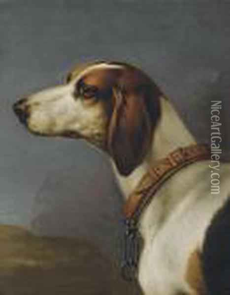 Head Of A Hound Oil Painting - John Wootton