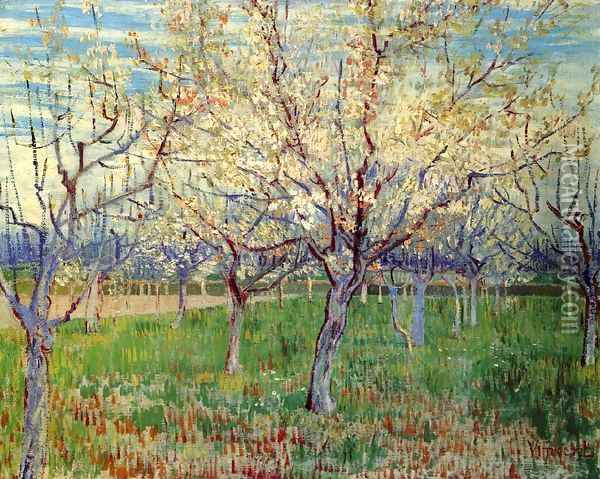 Orchard With Blossoming Apricot Trees Oil Painting - Vincent Van Gogh