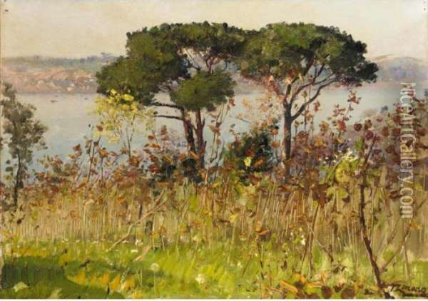 Two Pines On The Hills Above Beylerbeyi, Istanbul Oil Painting - Fausto Zonaro
