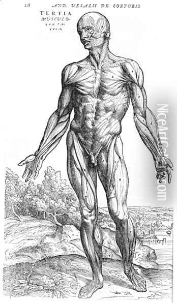 Anatomical Study, illustration from De Humani Corporis Fabrica by Andreas Vesalius 1514-64 Basel, 1543 3 Oil Painting - Andreas Vesalius