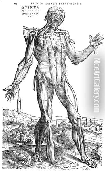 Anatomical Study, illustration from De Humani Corporis Fabrica by Andreas Vesalius 1514-64 Basel, 1543 2 Oil Painting - Andreas Vesalius
