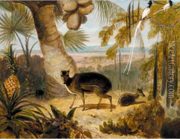 Musk Deer, And Birds Of Paradise Oil Painting - William Daniell RA