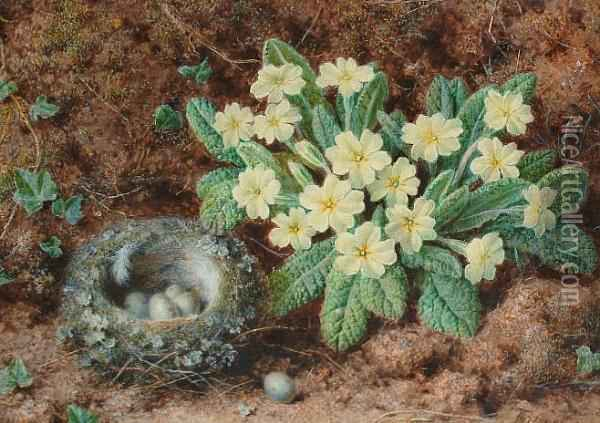 A Still Life With A Bird's Nest And Primroses Oil Painting - William B. Hough