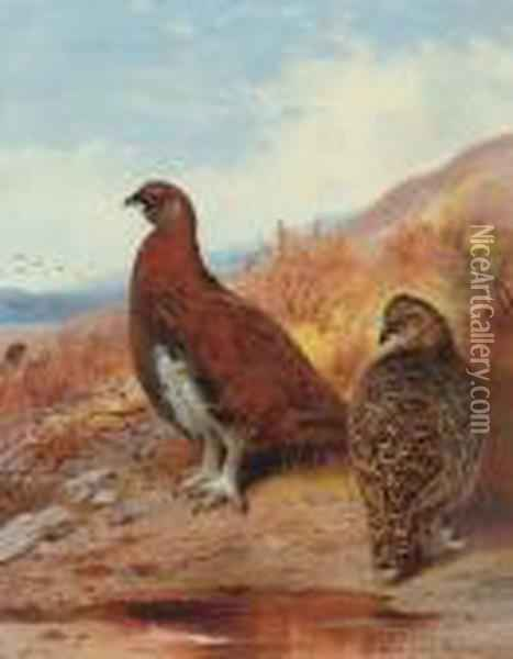 A Pair Of Red Grouse, In Moorland Oil Painting - Archibald Thorburn