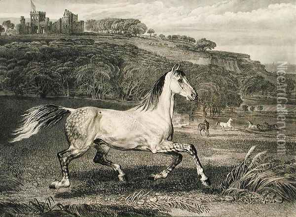 Cossack Horse, from Celebrated Horses, a set of fourteen racing prints published by the artist, 1823-24 Oil Painting - James Ward