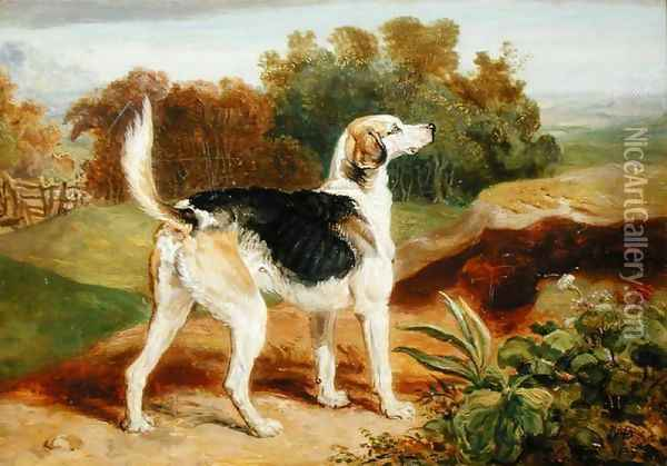 Ravager, one of the Lambton Hounds Oil Painting - James Ward