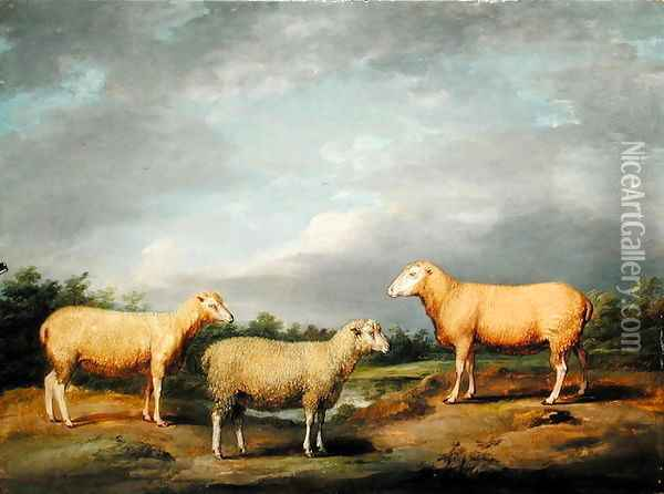 Ryelands Sheep, the King's Ram, the Kings Ewe and Lord Somervilles Wether, c.1801-07 Oil Painting - James Ward