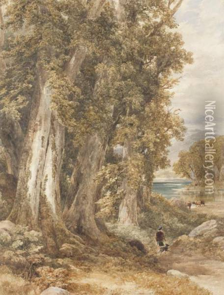 The Woodland Edge Oil Painting - David Cox