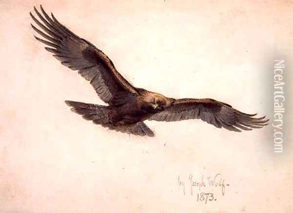 Eagle in flight, 1873 Oil Painting - Joseph Wolf