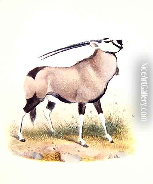 The Gemsbok, from The Book of Antelopes Oil Painting - Joseph Wolf