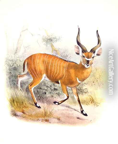 The Broad Horned Antelope, from The Book of Antelopes Oil Painting - Joseph Wolf