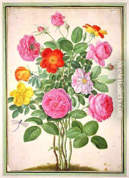 Roses, plate 4 from the Nassau Florilegium Oil Painting - Johann Jakob Walther