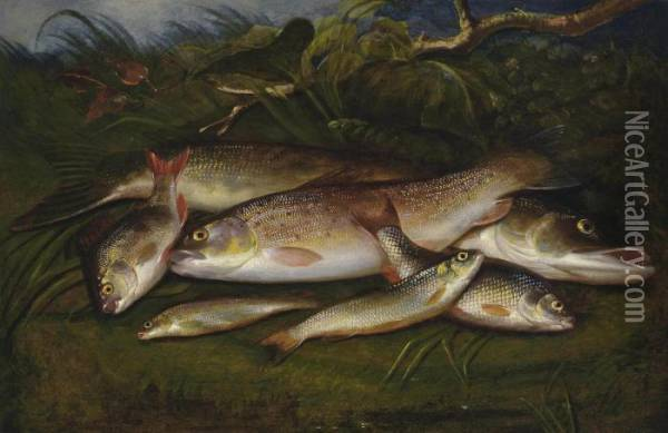 Trout, Pike, Roach, Dace And Gudgeon On A Riverbank Oil Painting - Henry Leonidas Rolfe