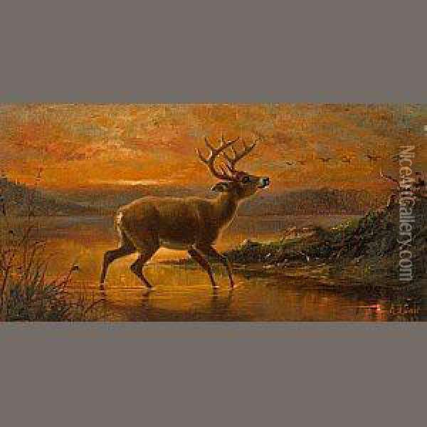 Ten Point Buck At Evening Twilight Oil Painting - Arthur Fitzwilliam Tait