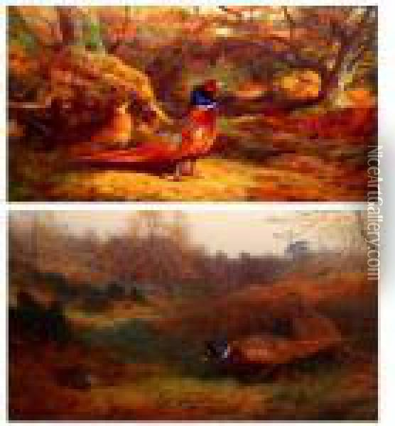 Pheasants In Woodland Oil Painting - Archibald Thorburn