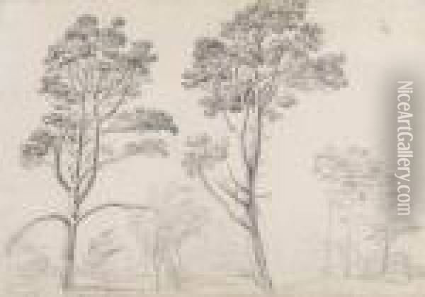 Two Studies Of Pine Trees At Hamilton Palace, Scotland Oil Painting - James Ward