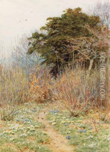 In A Spring Copse: 'here The White-rayed Anemone Is Born' Oil Painting - Helen Mary Elizabeth Allingham