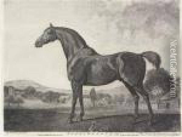Sweetwilliam Oil Painting - George Stubbs