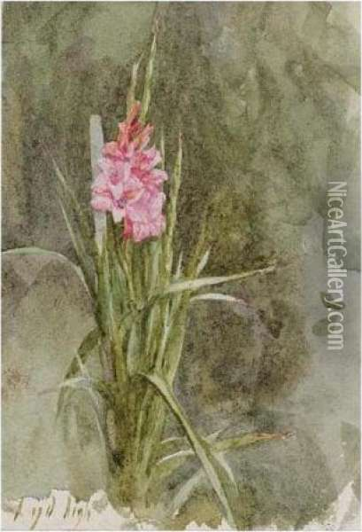 Sunflower; Pink Gladiolae Oil Painting - Helen Mary Elizabeth Allingham