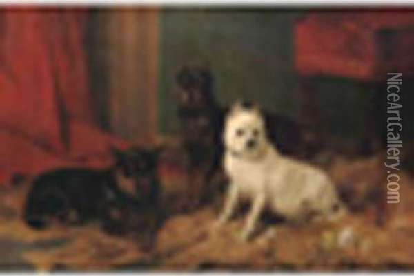 R.a. Twomanchester Terriers  With An Old English White Terrier Signed Andinscribed ' R. Ansdell Esq, 7  Victoria, Kensington, On An Old Labelon Reverse, Oil On Canvas 24 X  36in Oil Painting - Richard Ansdell