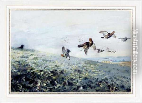 A Covey Of Grey Partridge  Beingshot Over A Turnip Field. Watercolour. Signed. Mounted, Framed  Andglazed Oil Painting - Archibald Thorburn